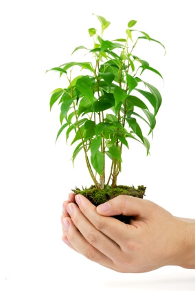 Hands take care of small plant